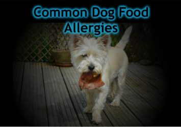 common dog food allergies