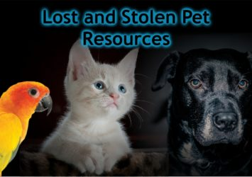 lost and stolen pets resources image